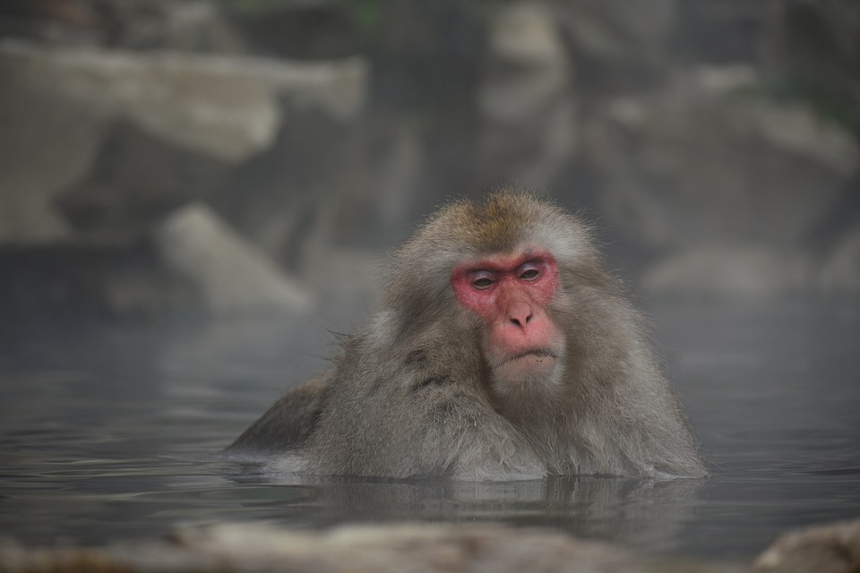 猿が温泉に入っている