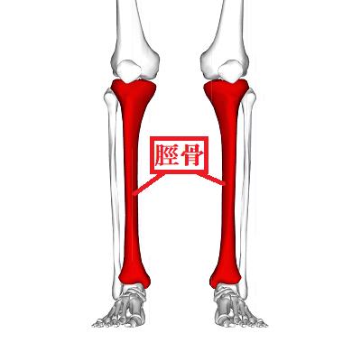 脛骨の位置