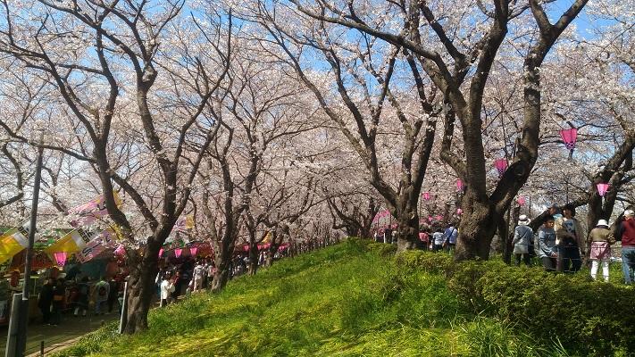 桜の四重層