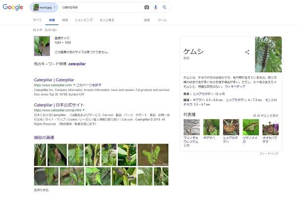 検索結果:毛虫
