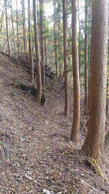 登山口→駒ヶ岳その1