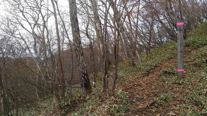 登山口→駒ヶ岳その5