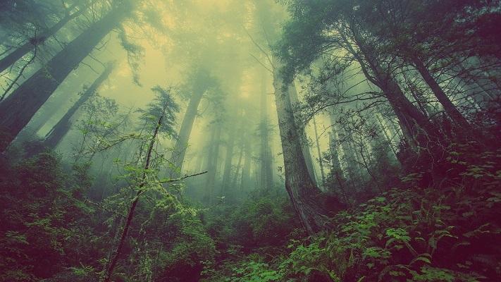 異世界の森