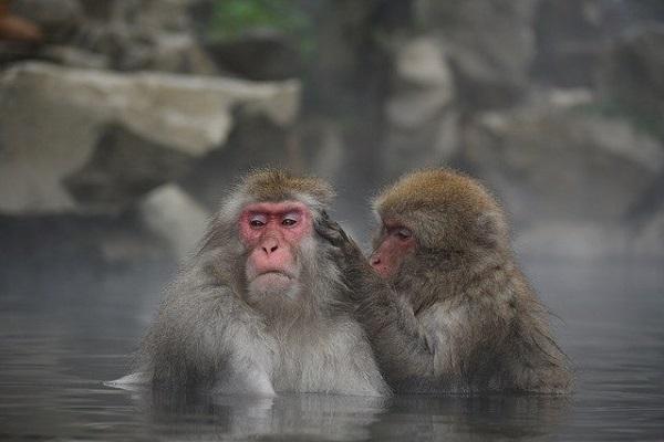 おさる入浴