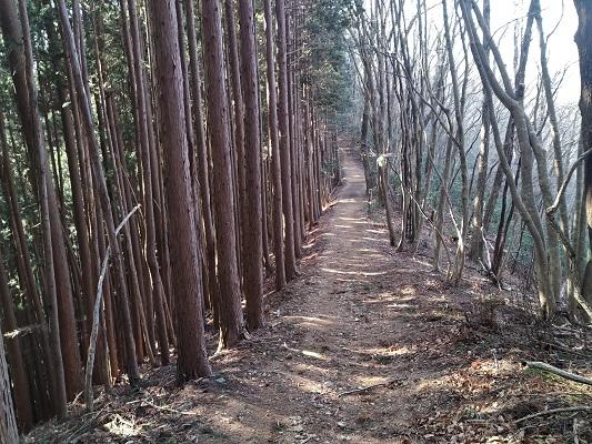 歩きやすい尾根道