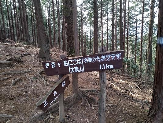 大倉山、下山の分岐へ