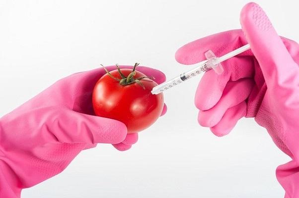 トマト遺伝子駐車
