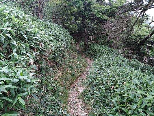 遊歩道コースの道